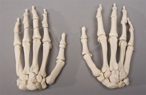 Skeleton Hands Life Size Pair 2nd Class Sm376d 2695