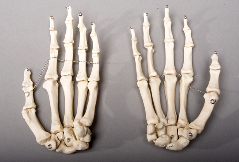 Skeleton Hands, life-size, pair, 2nd class [SM376D] - $26.95 ...
